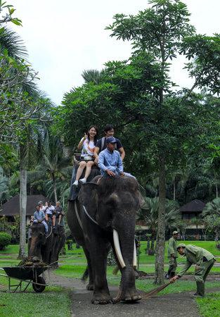 BALI, INDONESIA - NOVEMBER 17, 2017 : Tourist enjoy riding a Sumatran elephant at Mason Elephant Safari Park & Lodge in Ubud, Bali.