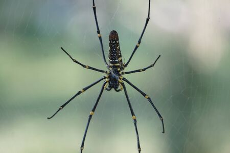 spiders in a garden