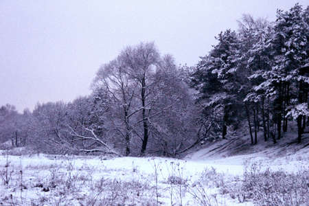 marge: Winter forest and field covered by snow