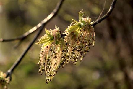 Tree seeds Stock Photo - 15826783