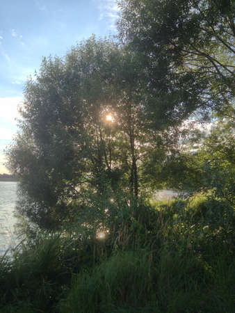 bright: Summer river and forest