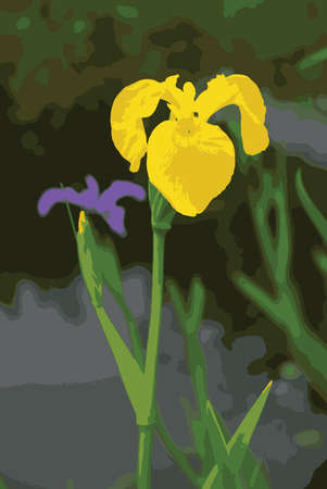 pinery: Iris pseudacorus and Iris ensata