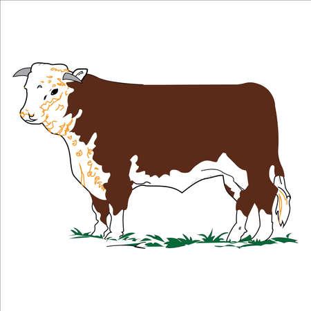 Vector Hereford Bull Illustration on Grass Ilustração