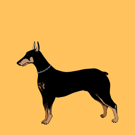 watchful: Vector Doberman Pinscher Illustration