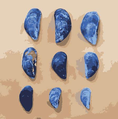 molluscs: Vector Illustration of 9 Muscle Shells
