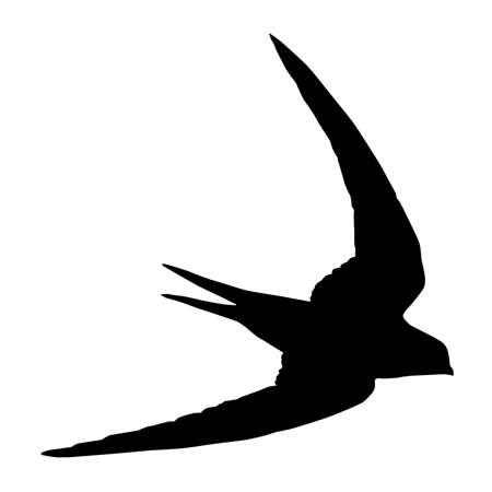 migrating birds: Swift, Apus Apus Silhouette