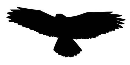 buzzard: Buzzard, Buteo Buteo, Silhouette