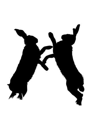 hares: Fighting Hares, Vector Silhouette Illustration