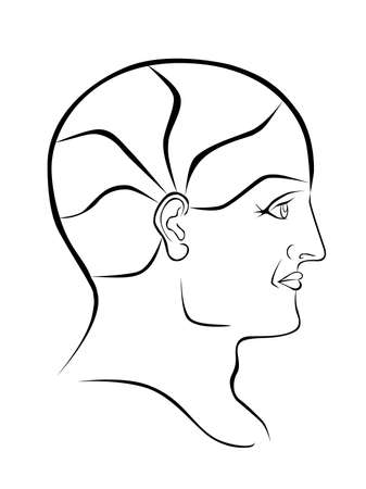 psychiatry: Vector Phrenology Head Blank Outline with 5 Brain Sectors