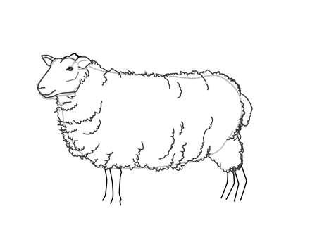 naturally: Vector Sheep Sketch Black and White Illustration Illustration