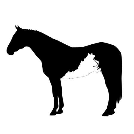 Vector Horse Silhouette with Virginia Patch Illustration