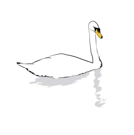 Mute Swan Vector Illustration Vettoriali