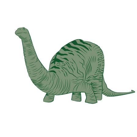 Vector - Apatosaurus Line Drawing Sketch Green Stock Vector - 83001120