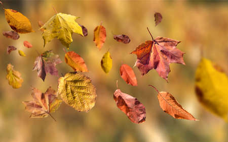 autumn leaves on the floor on a lovely fall day Stock Photo