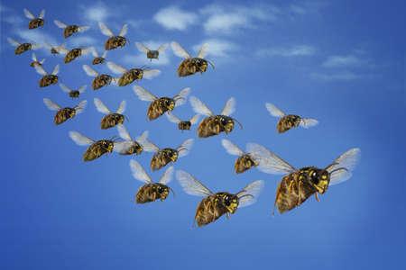 wasp attack swarm hunt nest wasp nest queen hornet