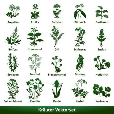 herbal medicinal vector set echinacea gentian johns wort Ilustracja