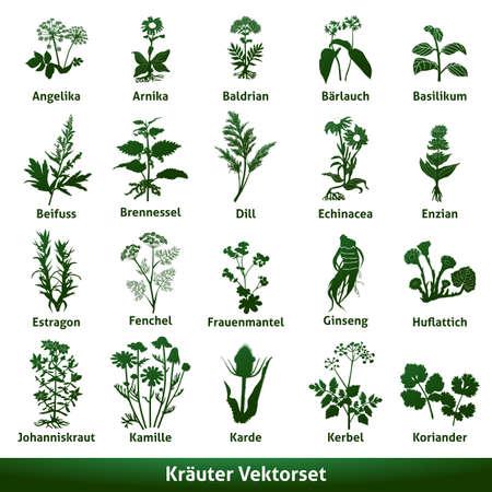 herbal medicinal vector set echinacea gentian johns wort Illustration
