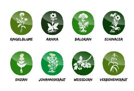 Marigold Arnica Valerian Echinacea Gentian St. John's Wort Hawthorn Verbena herb