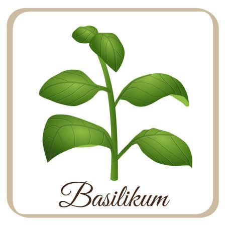 basil vector herbal herb season italian italy tomato mozarella mediteran