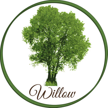 willow tree as vector drawn with single leaves