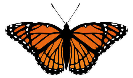 butterfly moth vector monarch orange insect flutter