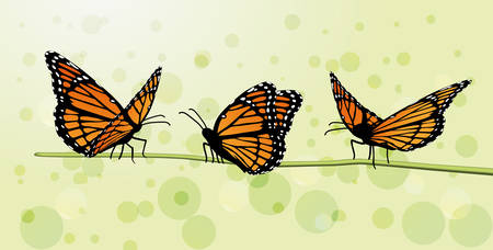 monarch butterfly Danaus plexippus front side flat open Ilustração