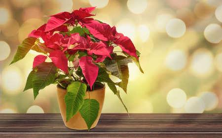 lovely christmas plant background lights