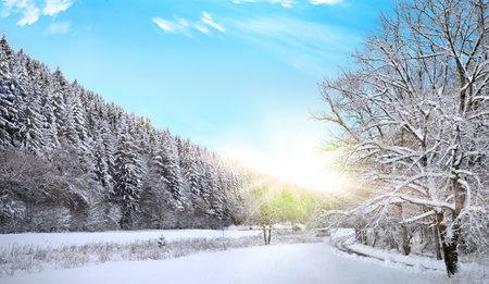snow winter forest christmas winter wonderland sunset