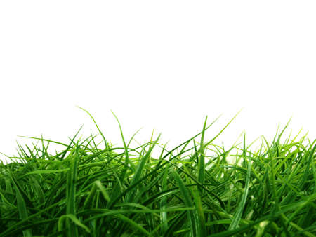 cut grass: Isolated Grass