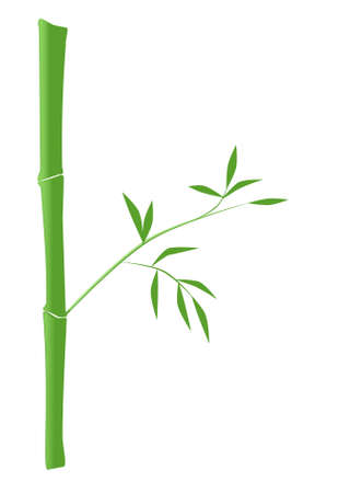 Illustration of green bamboo Stock Vector - 8290873