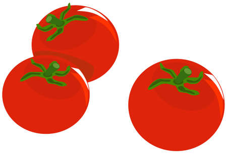 Tomatoes on white background Ilustrace