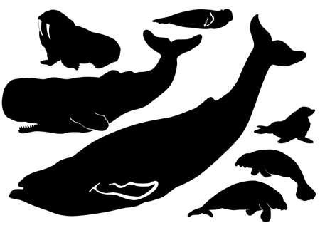 corcovado: Siluetas de animales de vida de mar Vectores