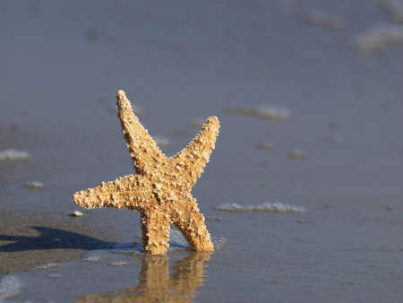 Starfish on a beach photo