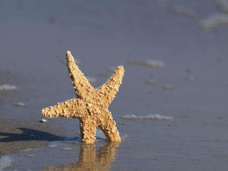 Starfish on a beach Stock Photo - 10056729