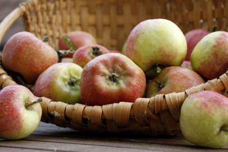 plentiful: Plentiful harvest