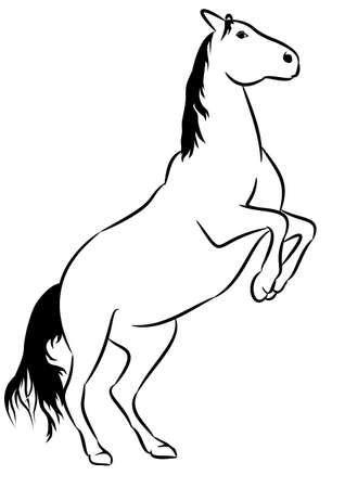 Wild horse, line drawing Vector