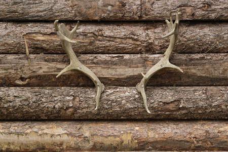 bocinas: Fondo de madera con cuernos de venado