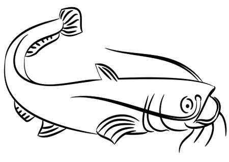 fish type: Line drawing of a cat fish on a white background Illustration