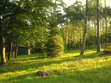 Beautiful morning light beams, sunrise background in the forrest