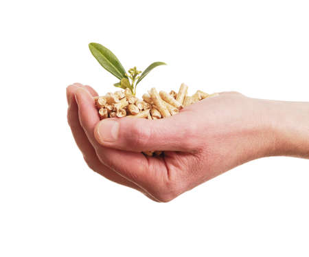 Alternative energy concept with a hand holding wooden pellets with a young plant