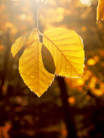 Beautiful autumn foliage in the morning backlight with space for text