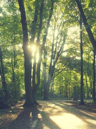 Bright sunrise in a park, vintage color stylized Reklamní fotografie - 130072793