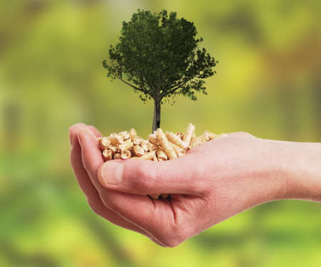 Alternative energy concept with a hand holding wooden pellets with a big oak tree Stockfoto