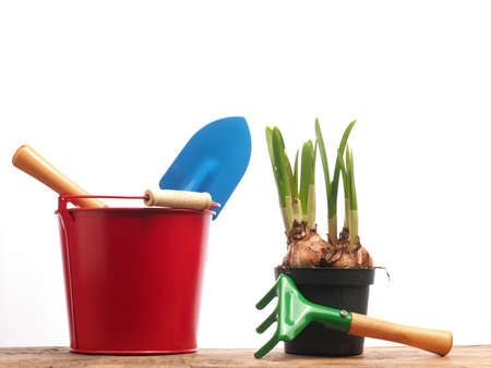 Red bucket with gardening tools and a growing narcissus on a white background Banco de Imagens