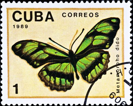 cuba butterfly: CUBA - CIRCA 1989: postage stamp shows butterfly Metamorpho dido, circa 1989