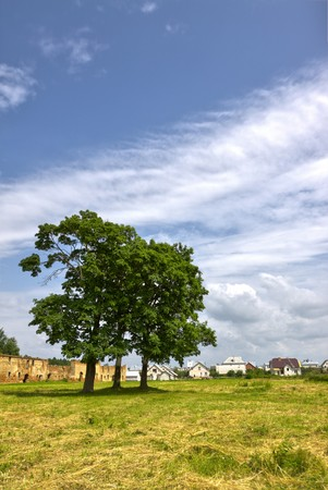 country landscape with big trees photo