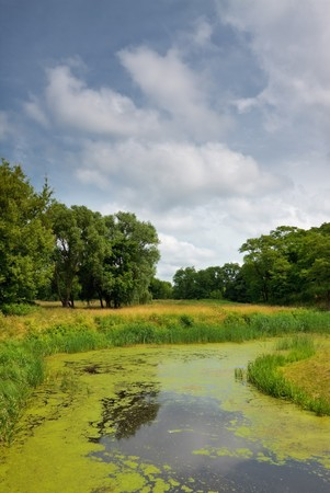 calm river in forest, summer daytime Stock Photo - 7565135