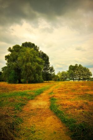 mown hay on summer meadow photo