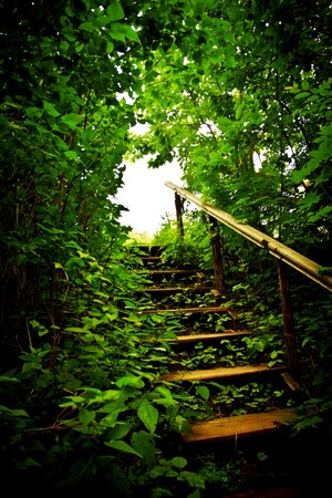 the thicket: wooden staircase in a forest thicket