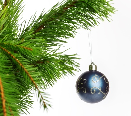 blue decoration ball on fir branch, isolated on white